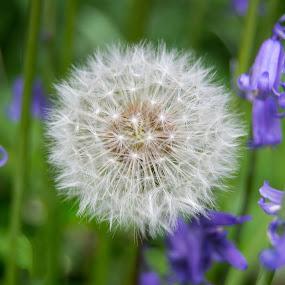 by Jo Darlington - Novices Only Flowers & Plants
