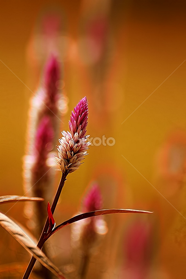 by Borneo Photography - Nature Up Close Leaves & Grasses