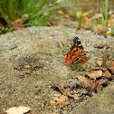 Mariposa Colorada