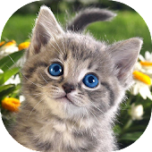 Kittens Live Wallpaper
