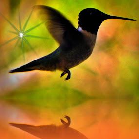My favorite hummingbird picture. by Christine Warner - Digital Art Animals ( bird, creation, reflection, animal profile, novice, hummingbird, digital art, art, novices only, birds, animal,  )