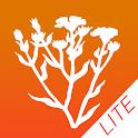 Bachblüten für Kinder - Lite