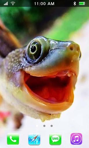 Turtles Сute live wallpaper