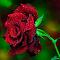 _DSC3285_Pixoto.jpg