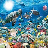 Relaxing Aquarium Game