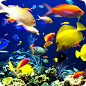 Cute Fish Live HD Wallpapers icon