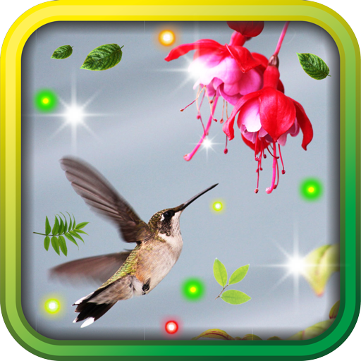 Colibri Top 100 live wallpaper LOGO-APP點子