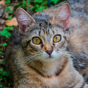 Young Molly by Bob Barrett - Animals - Cats Portraits ( cat, cat eyes, pet, family, whiskers )