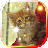 Pet Kitty photo Live Wallpaper