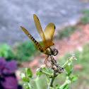 Dragonfly - Libélula