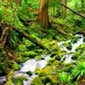 Rain Forest Sounds icon