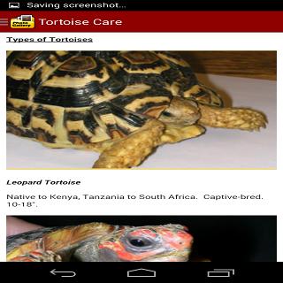 玩免費書籍APP|下載TORTOISE CARE 101 app不用錢|硬是要APP