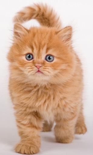 Крутой рыжий котенок