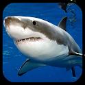 Sharks. Video Wallpaper icon