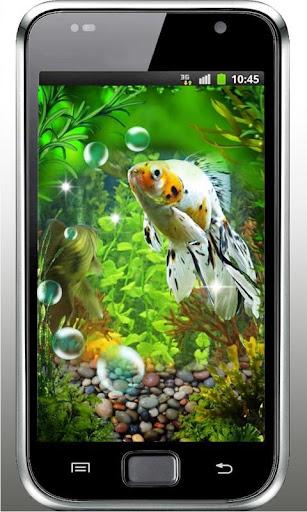 Gold Fishes Aquarium HQ LWP