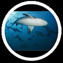 Killer Shark Live Wallpaper icon