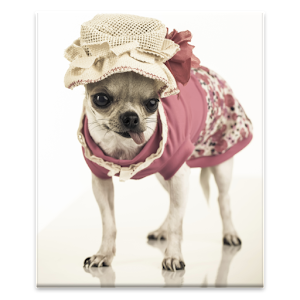 Pet Dress Up Icon