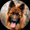 German Shepherd Wallpaper 2015 icon