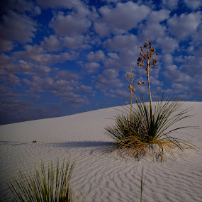 Moon Shadows by Bonnie Davidson - Landscapes Deserts ( clouds, canon 6d, planets, moon, white sand, shadows,  )