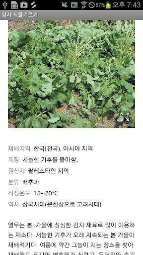 감자 식물 채소 텃밭 기르기