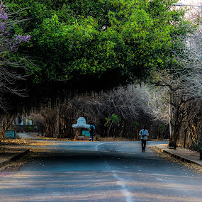 The Lonely Shadow by Neel Gengje - City,  Street & Park  Street Scenes ( university, green, shadow, trees, lonely, roads )