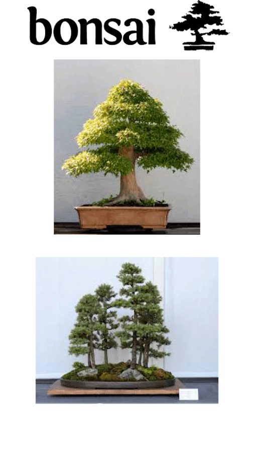 bonsai cuidados basicos android apps on google play