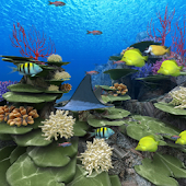 Coral Reef of Kerama Trial