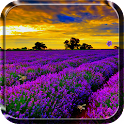 Lavender Live Wallpaper icon