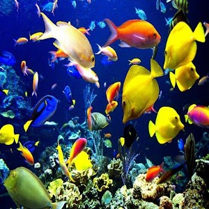 Tropical Aquarium Fish Guide