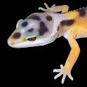 Leopard Gecko Pro 1.0