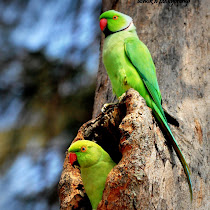 Birds of South India