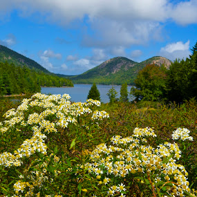 Acadia Wild Flowers by Roy Walter - Landscapes Travel ( nature, acadia national park, flowers in the wild, lake )