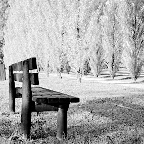 The bench by Andrea Magnani - Black & White Landscapes ( andrea magnani, black and white, infrared, landscape )