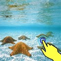 Magic wave: Starfish in seabed icon