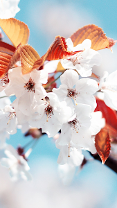 Spring Wallpapers for Chat screenshot 3