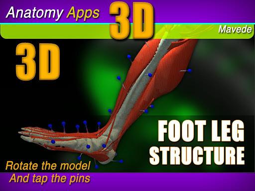 Foot Leg 3D Structure