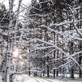 Good Morning by LeeAnn Heikkila - Landscapes Prairies, Meadows & Fields ( winter, season, snow, meadow, landscape )