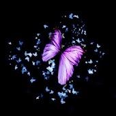 3D dancing butterfly A
