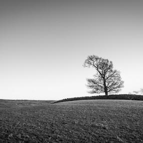 Hallgarth Tree by Alex Barrow - Landscapes Mountains & Hills ( kendal, field, cumbria, tree, black and white, relax, tranquil, relaxing, tranquility )