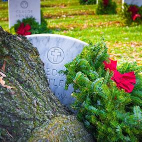 Gone but not forgotten by Michelle Nolan - City,  Street & Park  Cemeteries ( holliday, tree, cemetery, christmas, grave, washington dc, arlington cemetery,  )