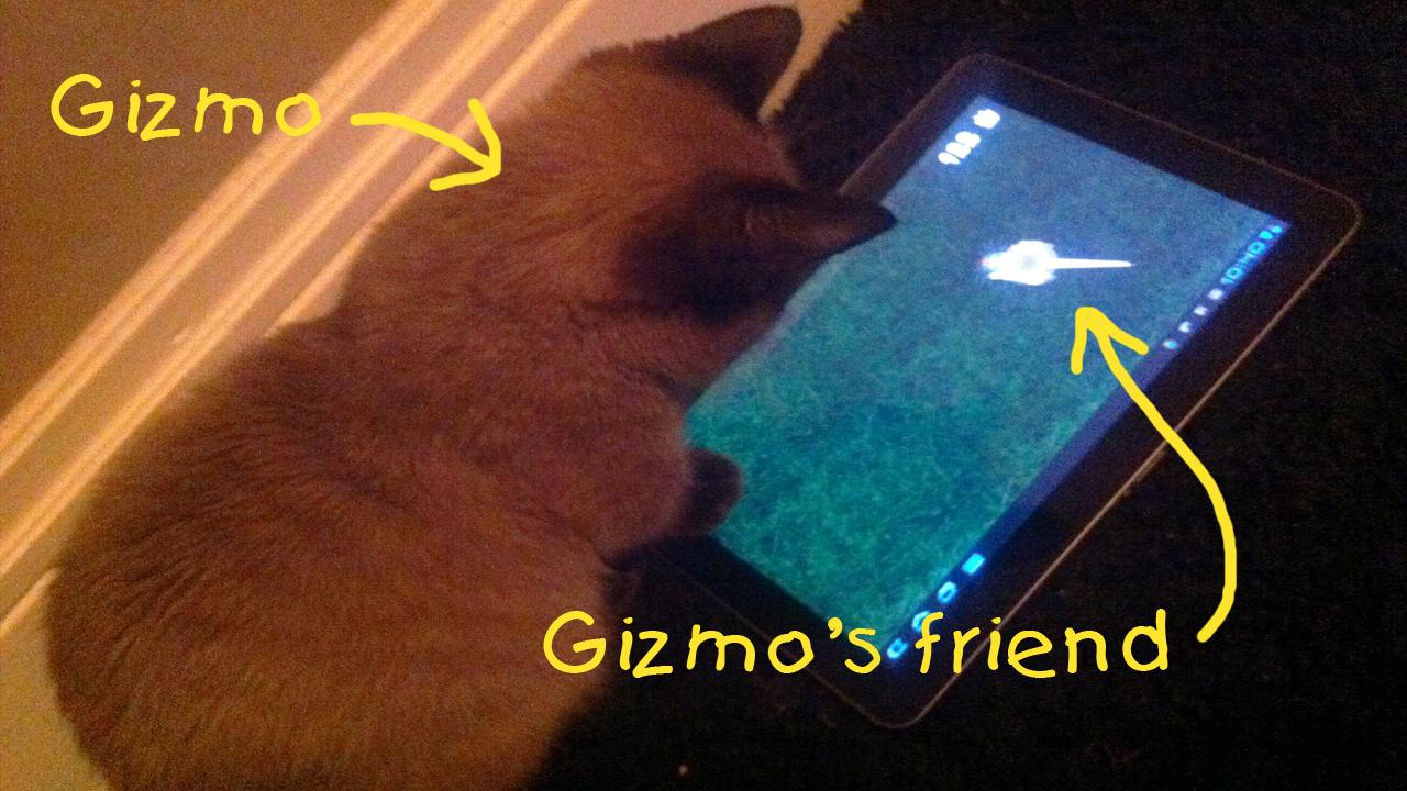 Gizzys Friend - a Cat Toy - screenshot