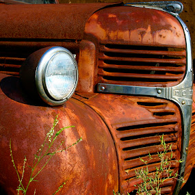 Better Days by David W Hubbs - Transportation Automobiles ( classic car, vintage, truck, rusty, rust, old truck, alone,  )