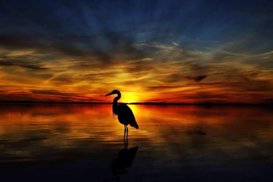 Blue Heron Sentry by Rick Danuser - Landscapes Sunsets & Sunrises