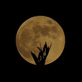 Full Moon by Asim Mandal - Nature Up Close Other Natural Objects