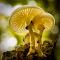 W Åsen svamp 64 DSC05667.jpg