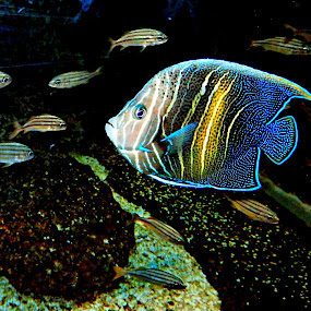 Fish by Cheryl Beaudoin - Animals Fish ( underwater, florida, fish, aquarium, tampa, , colorful, mood factory, vibrant, happiness, January, moods, emotions, inspiration, serenity, blue, mood, factory, charity, autism, light, awareness, lighting, bulbs, LIUB, april 2nd )