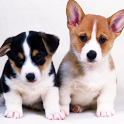 Dogs Wallpapers icon