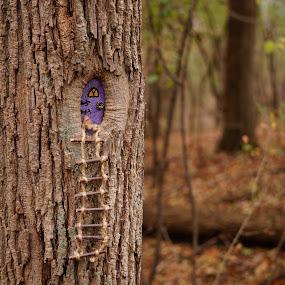 Purple Fairy Door by Joe Spandrusyszyn - Artistic Objects Other Objects ( ladder, rope, purple, tree, fae, fairy, door, rope ladder, faerie, small, miniature )