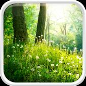 Orman Canlı Duvar Kağıdı