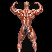 Muscle Gain & Mass Build‏